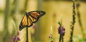 Pollinator gardens and habitats in Oklahoma